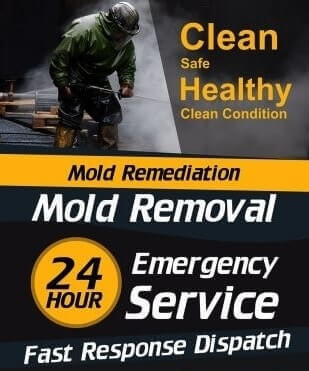 Mold Remediation Van  980 Van Zandt County