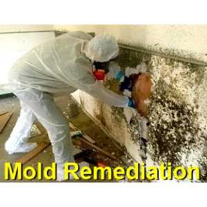 mold remediation Mcqueeney