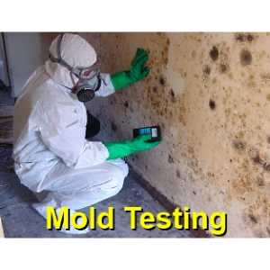 mold testing Camp Swift